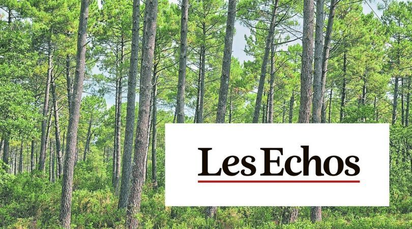 La forêt : un placement qui a la cote