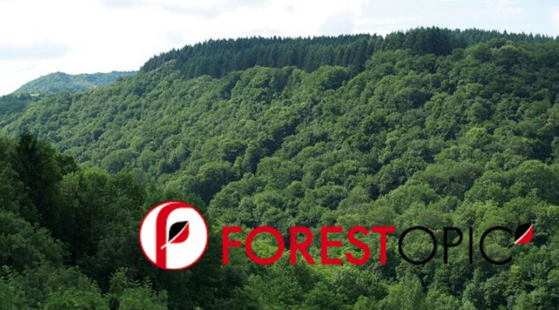 EcoTree invente le bail qui permet aux propriétaires forestiers de vendre des arbres par anticipation