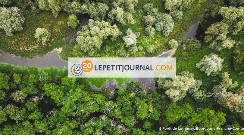 Le Petit Journal rencontre EcoTree à propos de la propriété d'arbres !