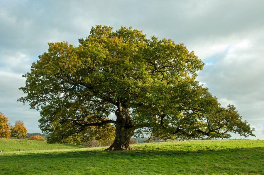 Quand les arbres nomment les lieux et les hommes 1/2