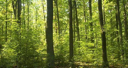 Des nouvelles de vos forêts !