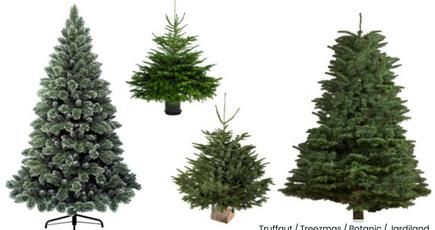 Le vrai sapin de Noël est écologique