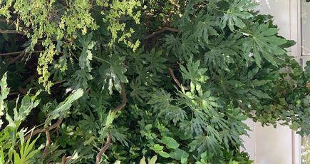 Les arbres s'exposent à la Fondation Cartier