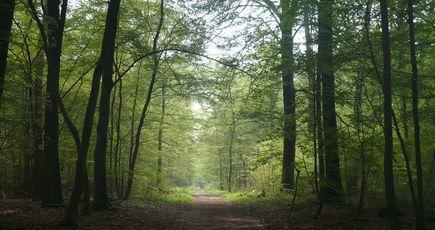 Forêt domaniale de Saint-Germain : vers un classement en forêt de protection