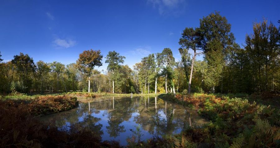 Les grandes forêts de France - Partie 2