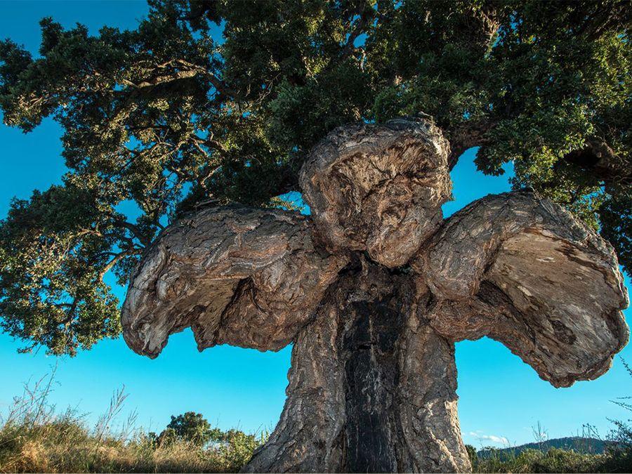 Votez pour le plus bel arbre d'Europe