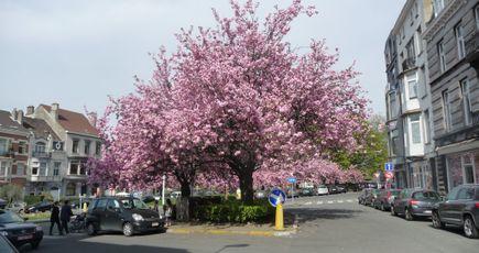 Ces villes où l'on plante des arbres
