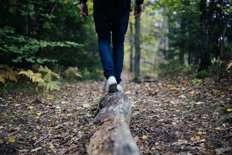 Pourquoi les arbres et les forêts ont besoin de propriétaires ?