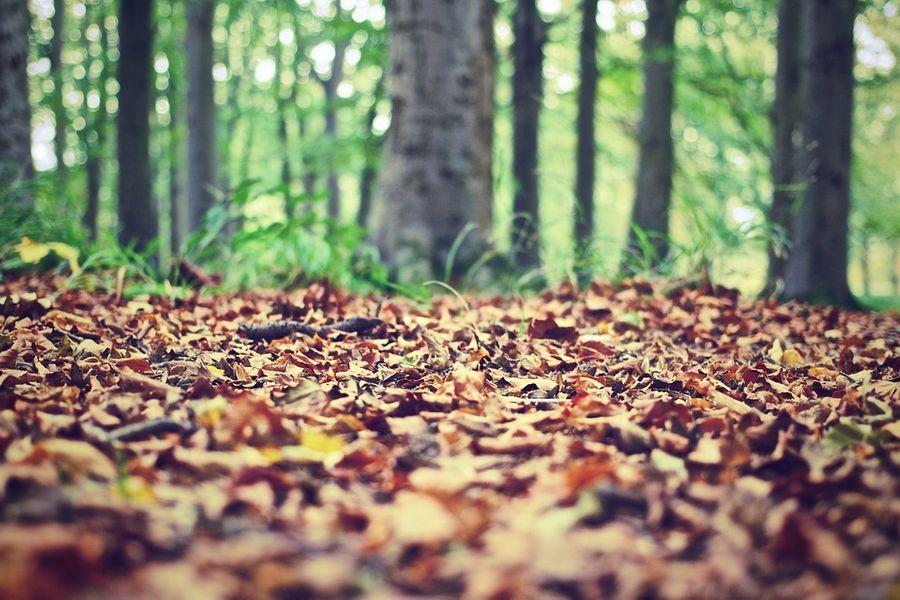Le sol, écrin vital de la forêt