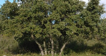 Le réchauffement climatique modifie l'aspect des forêts