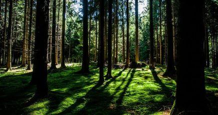 Arbas : la première forêt cinéraire de France