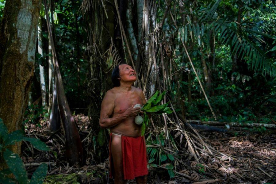 Forêt d'Amazonie : pas si vierge qu'on croit