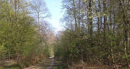 Saint-Germain-en-Laye : un plan pour garder des forêts propres