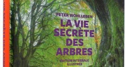 La vie des arbres, le livre révélation de de Peter Wohlleben
