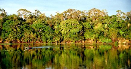 Exploiter la forêt tropicale est assez peu écologique
