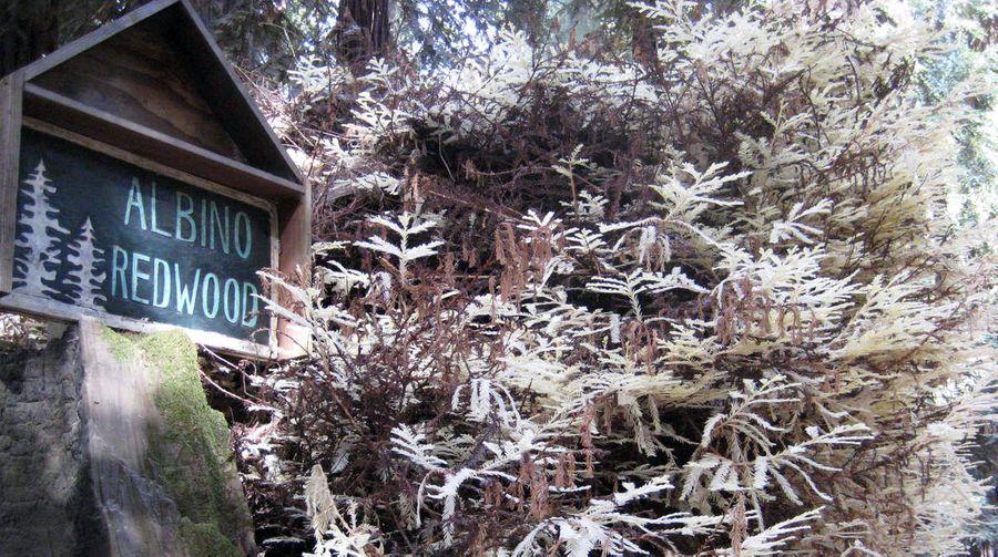 Des arbres contre des métaux lourds