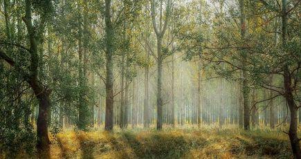 Une nouvelle forêt ancienne va voir le jour dans le Tarn