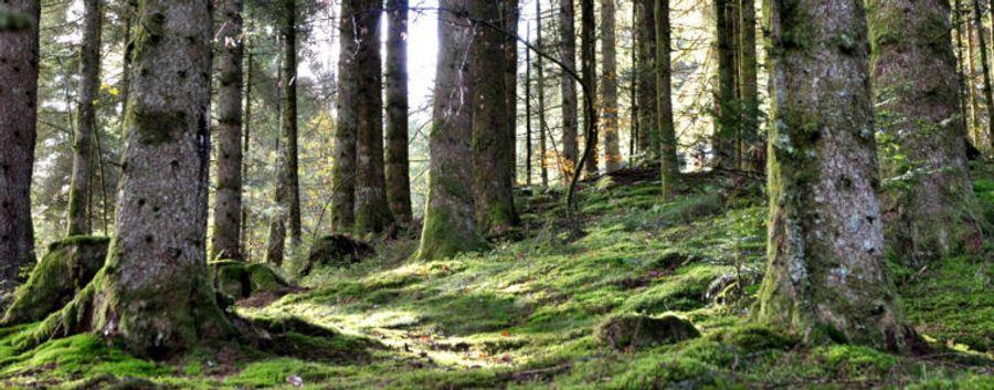 Il faut entretenir les forêts de France