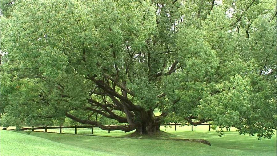L'Australie va planter un milliard d'arbres pour atteindre l'objectif des Accords de Paris