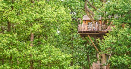 Avez-vous testé les cabanes dans les arbres ?