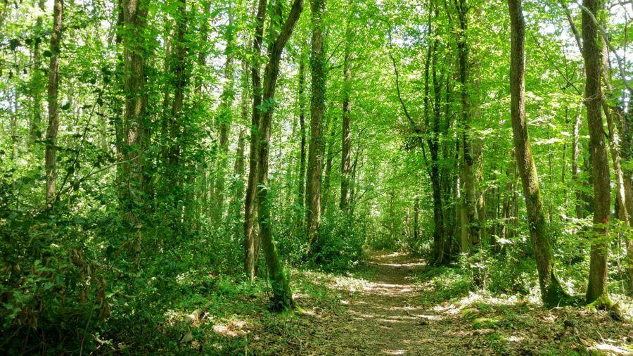 Les nouvelles de vos forêts