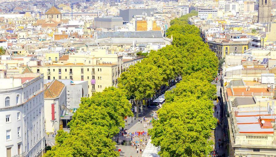 A quoi servent les arbres en ville ?