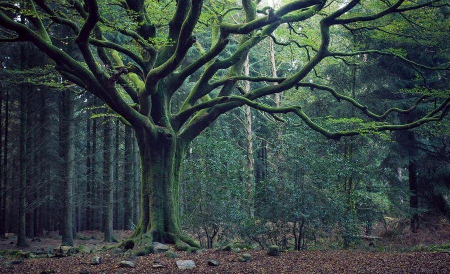 Quelques forêts de Bretagne (2/2)