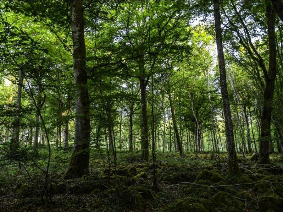 La forêt française se porte bien