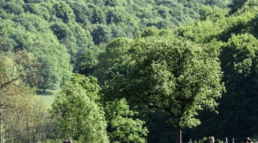 Bourgogne Champagne : la France crée un nouveau Parc national forestier