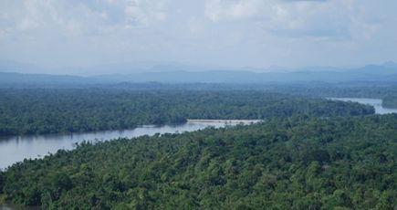 La Norvège fixe le prix du carbone mondial et incite le Gabon à préserver sa forêt