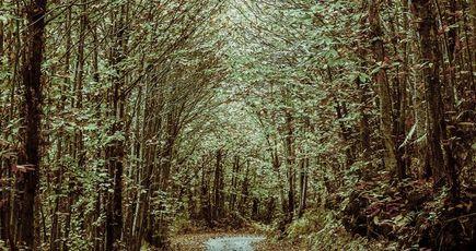 Réchauffement climatique : planter des arbres ET réduire nos émissions