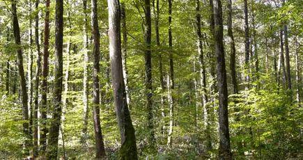 La forêt bretonne aussi fait face au changement climatique