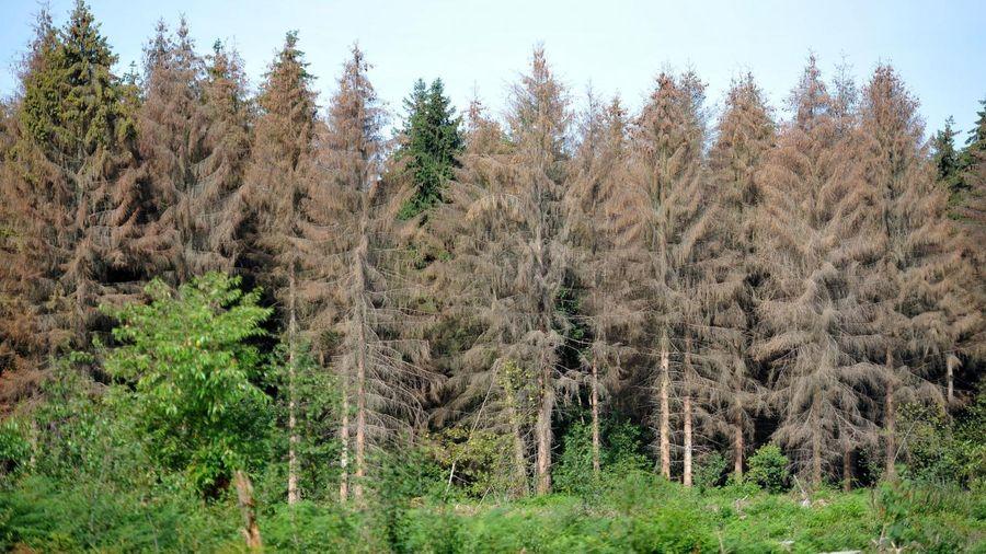 Les arbres rejoignent la liste des espèces menacées en Europe