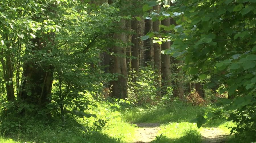 Les forêts en France : un partenariat public-privé ?