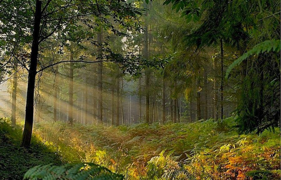 Quelques forêts de Bretagne (1/2)