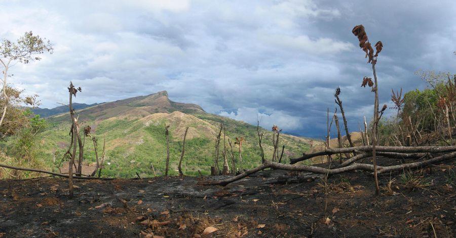 Afrique : comment éviter la déforestation ?