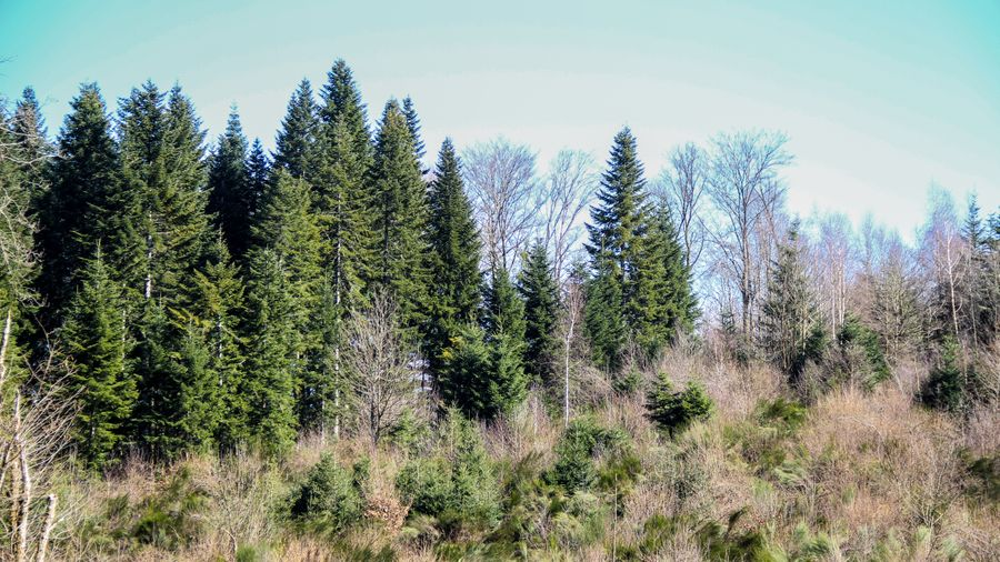 When it comes to sequestering carbon in the forest, all trees are efficient!