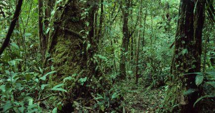 La sécheresse modifie l'anatomie des arbres