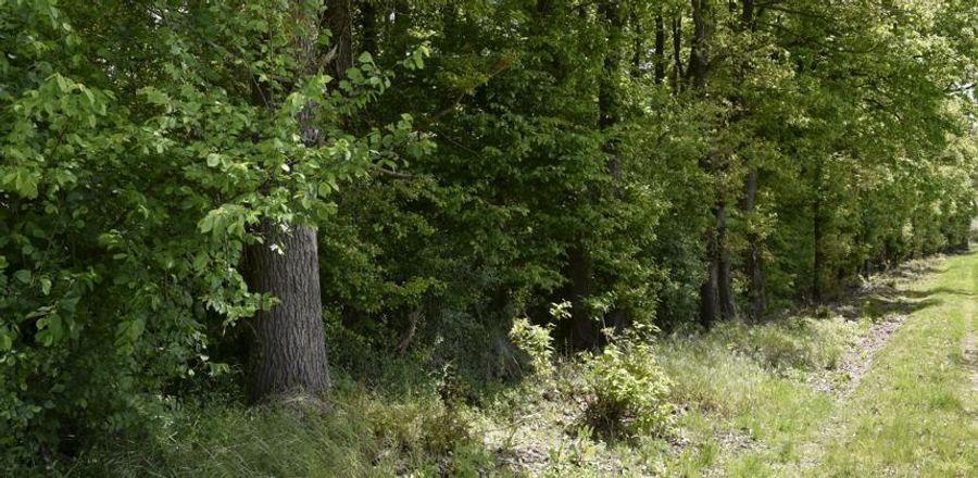 Forêts : faut-il attendre que l'UE s'en préoccupe ?