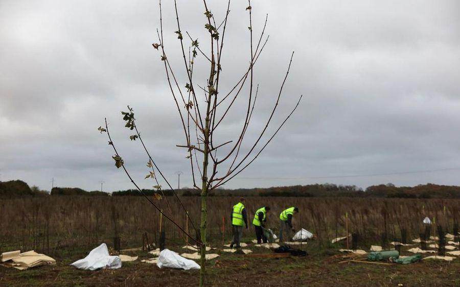 Une nouvelle forêt est née en Île-de-France