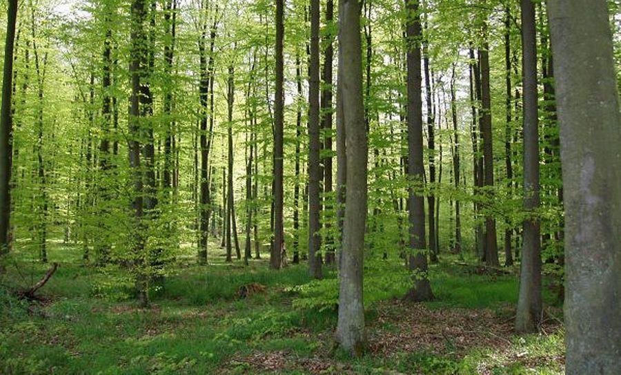 Forêt française : une « belle au bois dormant » ?