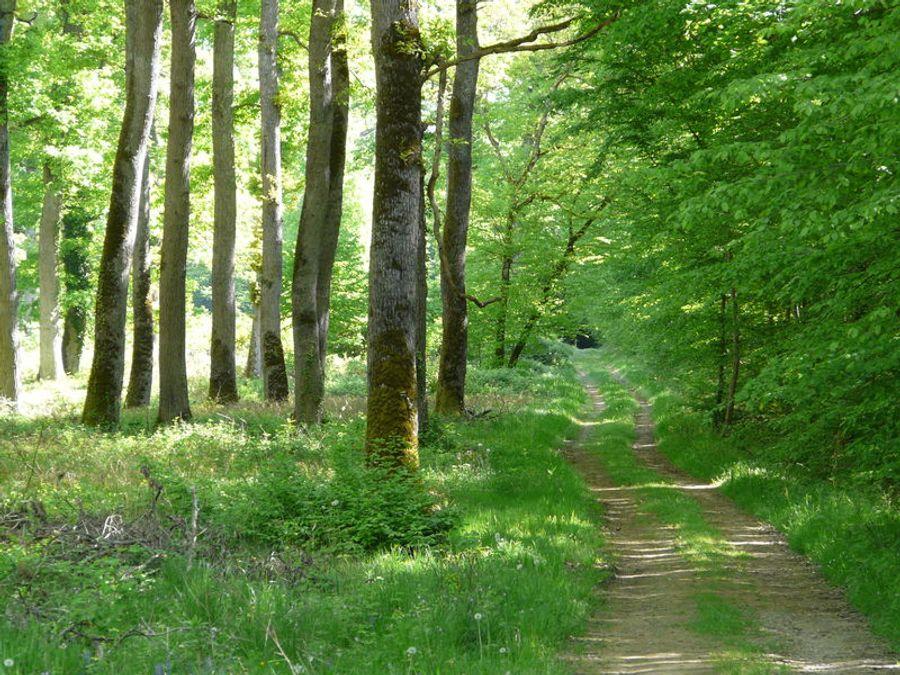Randonnées, promenades et activités en forêt