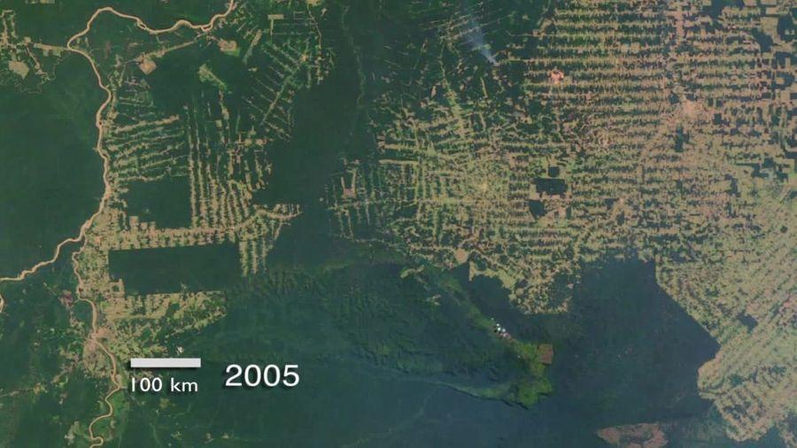 Les forêts tropicales émettent plus de CO2 qu'elles n'en absorbent