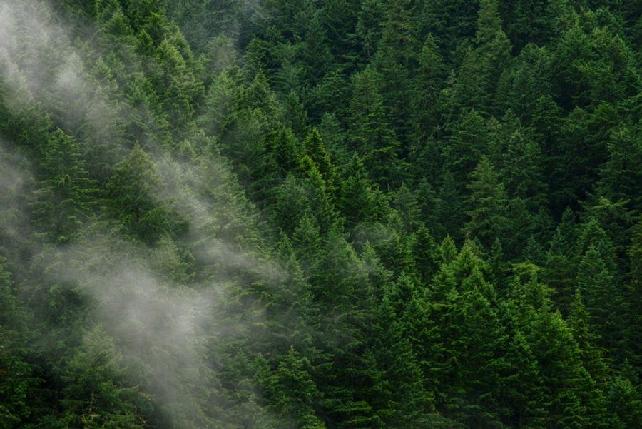 Combien de CO2 absorbe un arbre ?