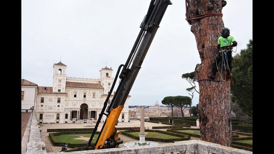 Villa Médicis : ces pins qui s'abattent