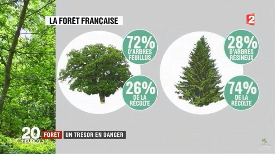 La guerre de la forêt n'aura pas lieu : résineux et feuillus, même combat !