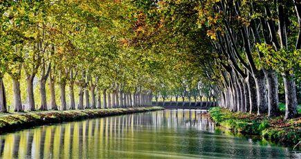 Canal du Midi : déjà 10 400 arbres replantés !