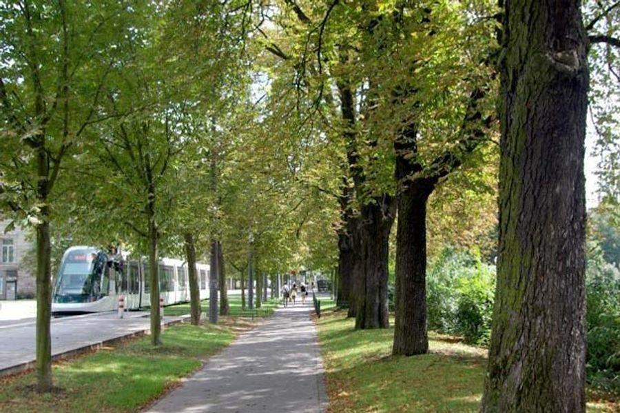 Pourquoi les villes ont besoin des arbres ?