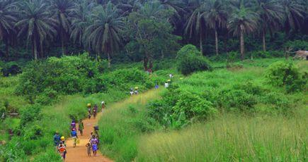 Défi de Bonn : restaurer les forêts mondiales