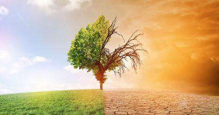 Réchauffement climatique : les forêts s'adaptent… pour l'instant